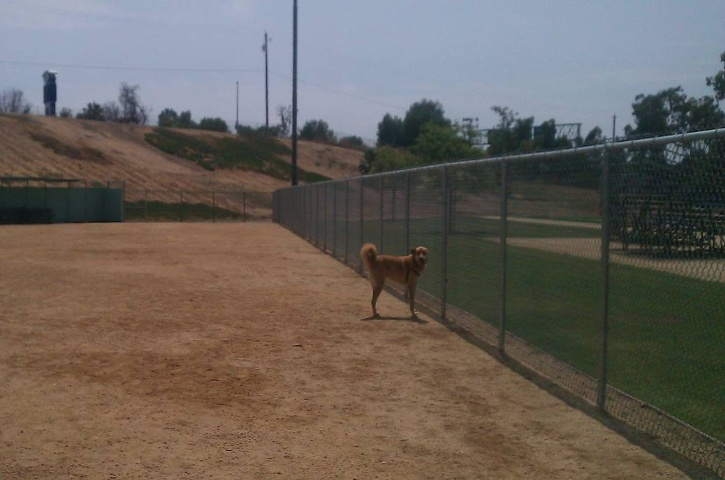 Dog park with image of dog